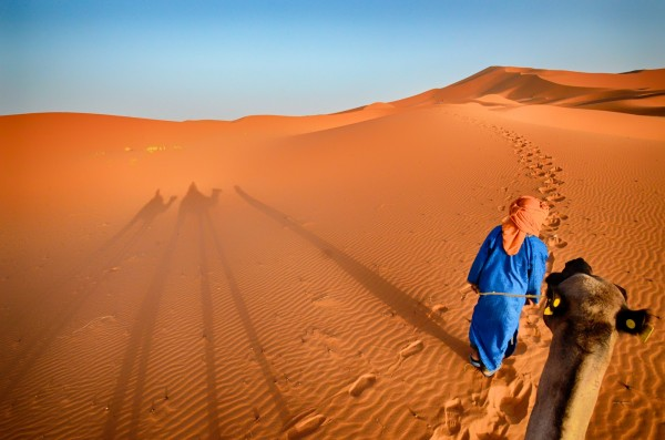 Camels shadows, red sand dunes, Sahara Desert, Morocco