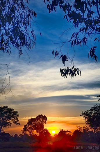 Colorful sunset seen through the trees, Angkor Wat, Cambodia