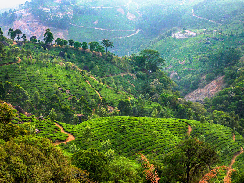 munnar-kerala-india-tea-plantations